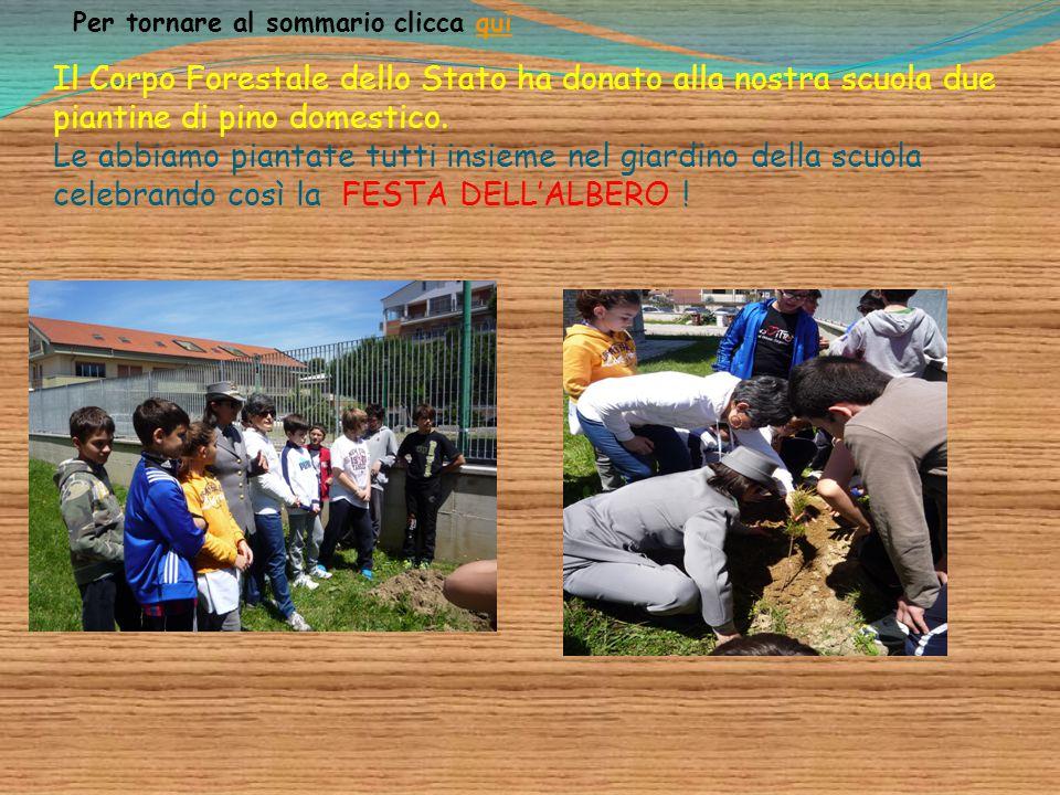 Il Corpo Forestale dello Stato ha donato alla nostra scuola due piantine di pino domestico. Le abbiamo piantate tutti insieme nel giardino della scuol