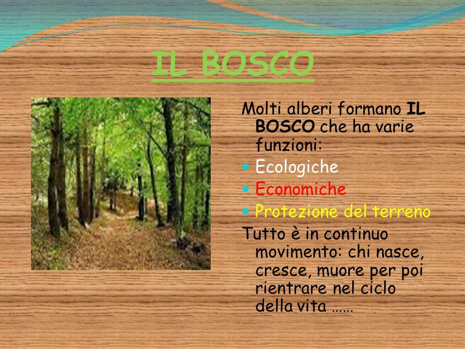 IL BOSCO Molti alberi formano IL BOSCO che ha varie funzioni: Ecologiche Economiche Protezione del terreno Tutto è in continuo movimento: chi nasce, c