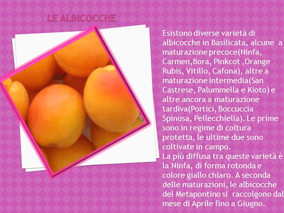 L'arancia Navel o Ombellicata, è un'arancia a polpa bionda e include diverse varietà che hanno periodi di maturazione diversi. Le più precoci sono la