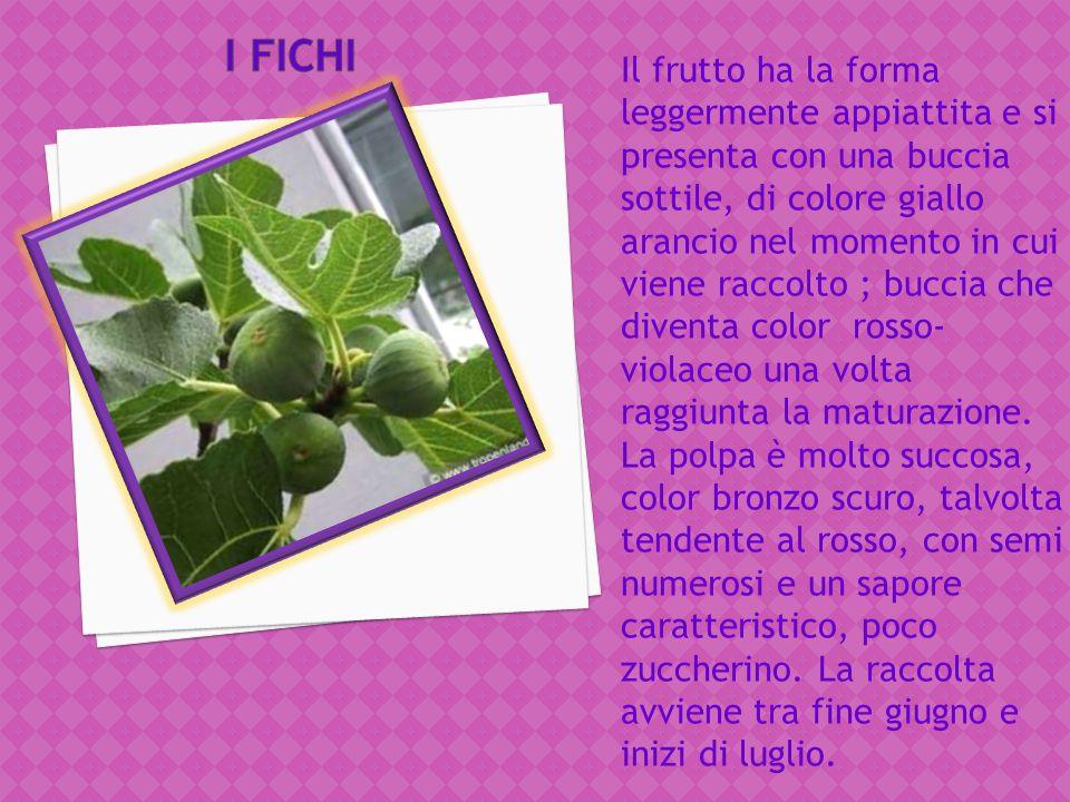 Esistono diverse varietà di albicocche in Basilicata, alcune a maturazione precoce(Ninfa, Carmen,Bora, Pinkcot,Orange Rubis, Vitillo, Cafona), altre a
