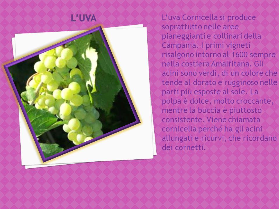 La coltivazione della fragola in Basilicata fu introdotta nel Metapontino nel 1955 ed ebbe una grande diffusione negli anni 60 e 70.esistono diverse v