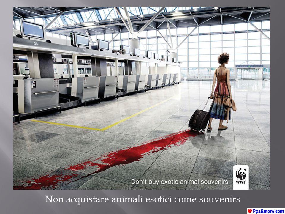 Non acquistare animali esotici come souvenirs