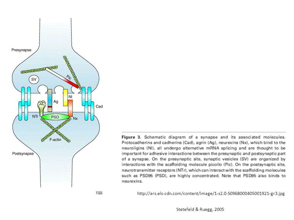 http://ars.els-cdn.com/content/image/1-s2.0-S0968000405001921-gr3.jpg Stetefeld & Ruegg, 2005