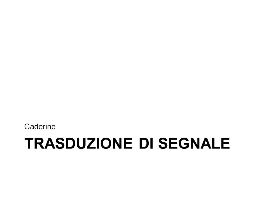 TRASDUZIONE DI SEGNALE Caderine