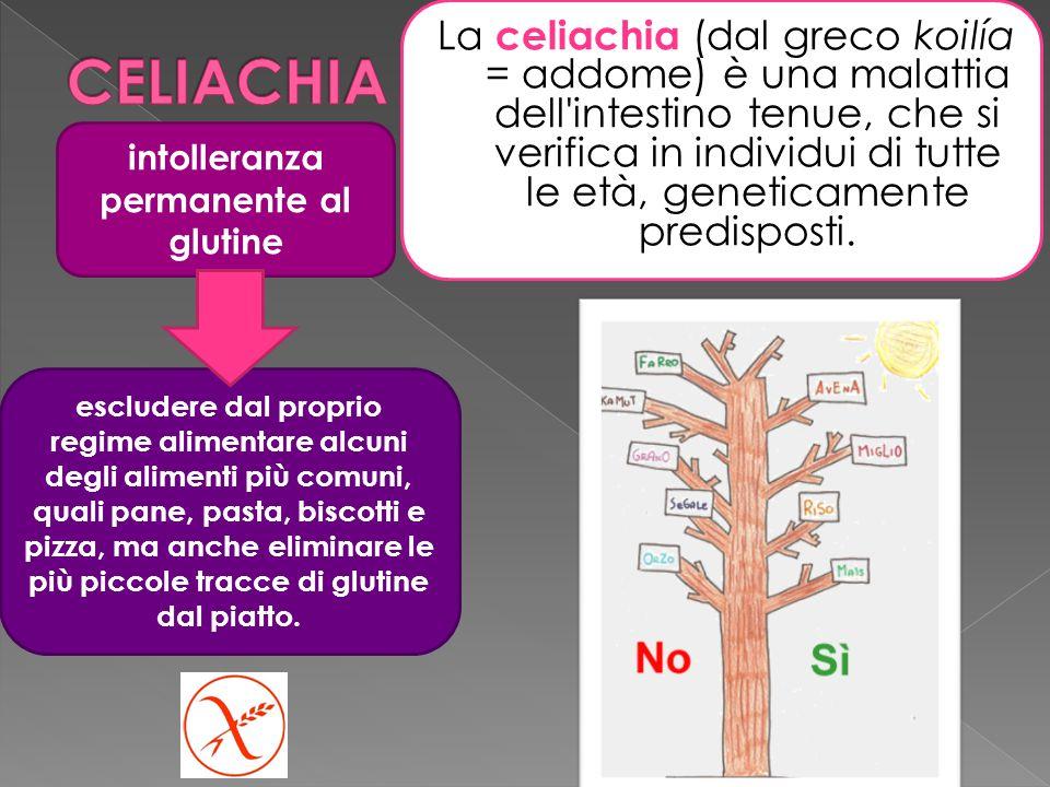 La celiachia (dal greco koilía = addome) è una malattia dell intestino tenue, che si verifica in individui di tutte le età, geneticamente predisposti.
