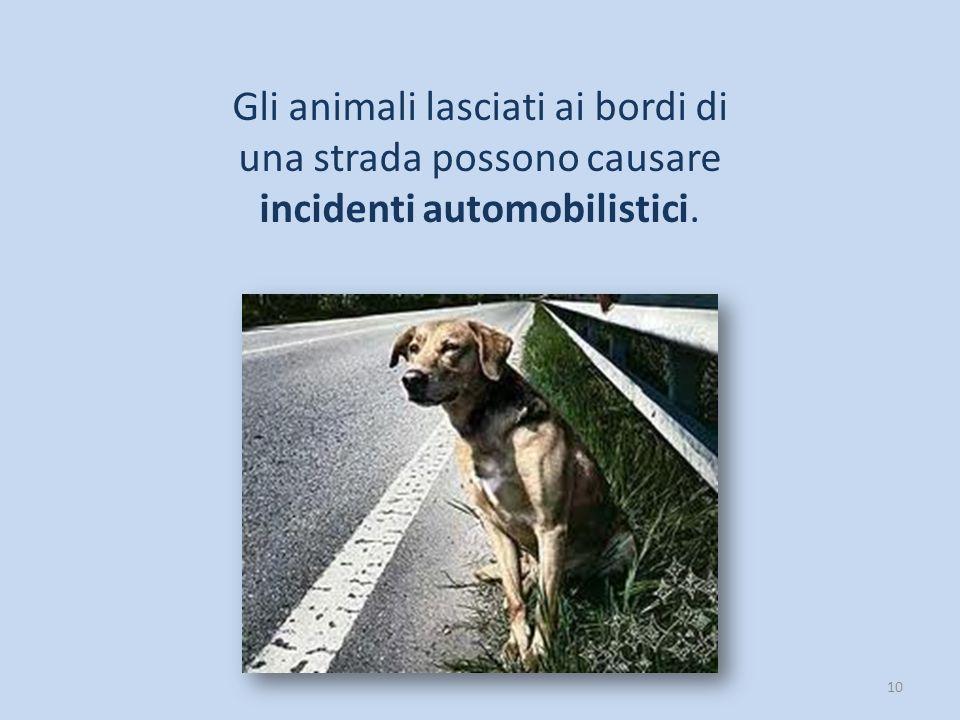 10 Gli animali lasciati ai bordi di una strada possono causare incidenti automobilistici.