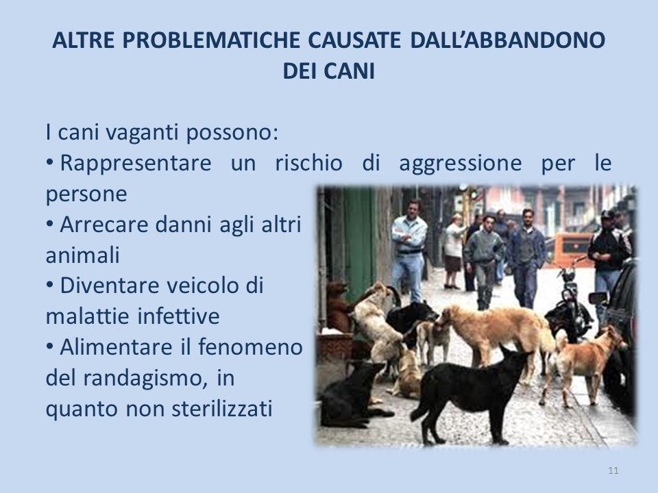 11 ALTRE PROBLEMATICHE CAUSATE DALL'ABBANDONO DEI CANI I cani vaganti possono: Rappresentare un rischio di aggressione per le persone Arrecare danni a
