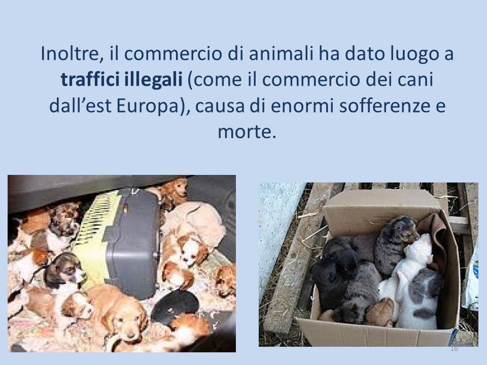 16 Inoltre, il commercio di animali ha dato luogo a traffici illegali (come il commercio dei cani dall'est Europa), causa di enormi sofferenze e morte