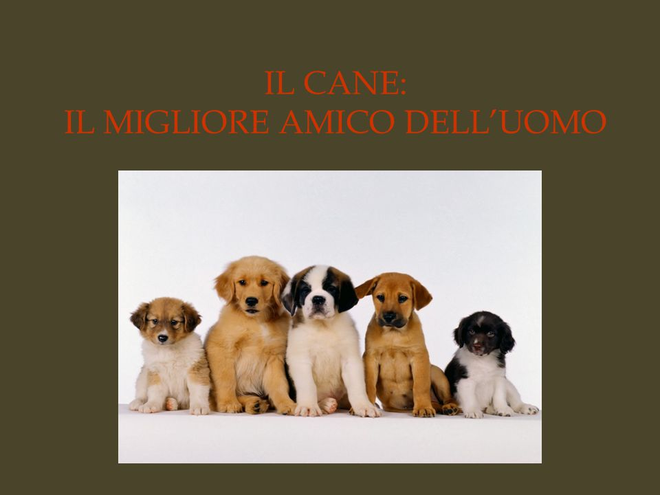 IL CANE: IL MIGLIORE AMICO DELL'UOMO