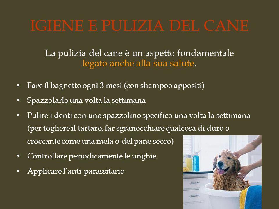 IGIENE E PULIZIA DEL CANE La pulizia del cane è un aspetto fondamentale legato anche alla sua salute. Fare il bagnetto ogni 3 mesi (con shampoo apposi