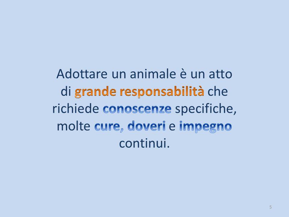 16 Inoltre, il commercio di animali ha dato luogo a traffici illegali (come il commercio dei cani dall'est Europa), causa di enormi sofferenze e morte.