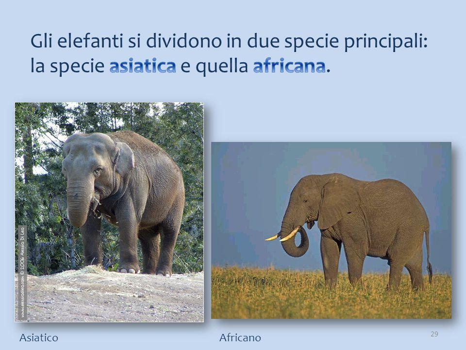 AsiaticoAfricano 29