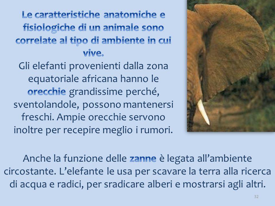 33 Guardate come si diverte questo cucciolo di elefante!