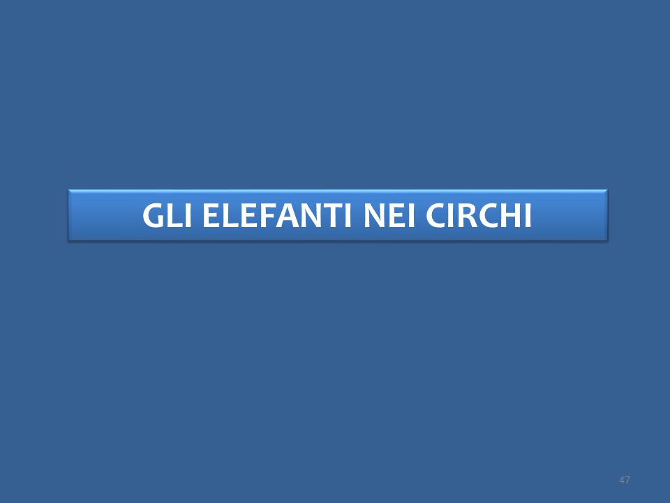 GLI ELEFANTI NEI CIRCHI 47