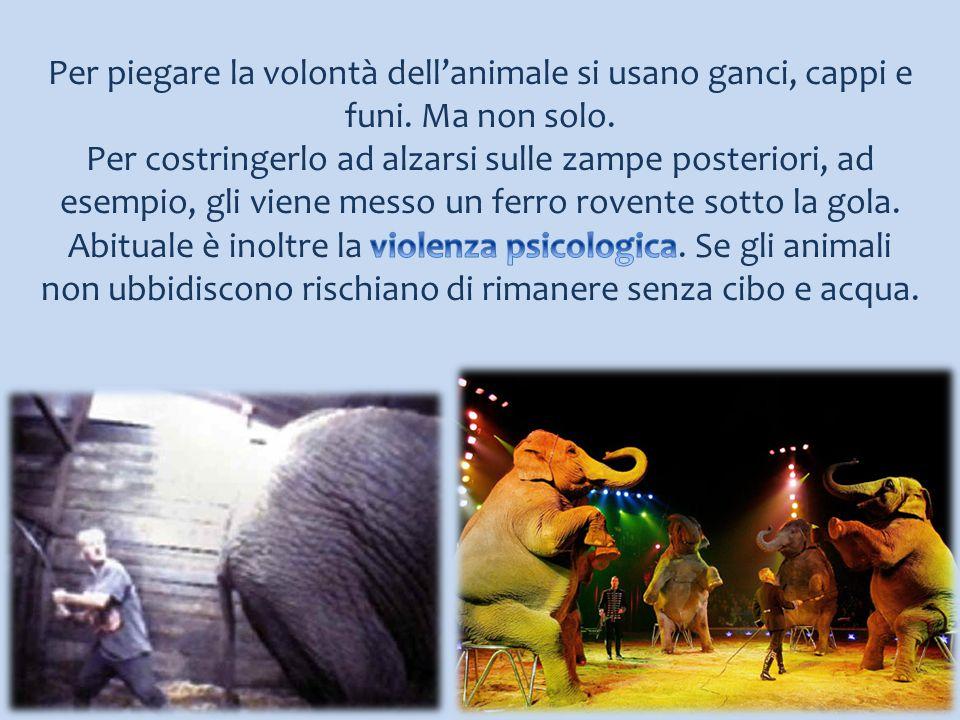 Un elefante in gabbia, o peggio ancora immobilizzato con delle catene alle zampe, prova le stesse sensazioni che proverebbe un umano a cui venisse negato di usare le mani e le gambe nel modo che gli è naturale.