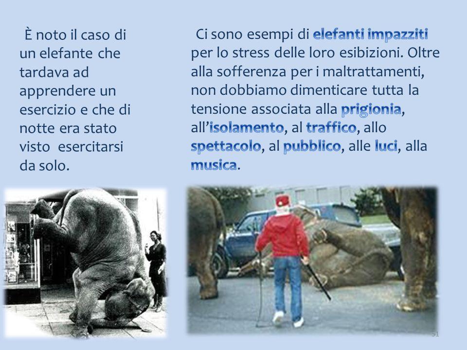 È noto il caso di un elefante che tardava ad apprendere un esercizio e che di notte era stato visto esercitarsi da solo. 51