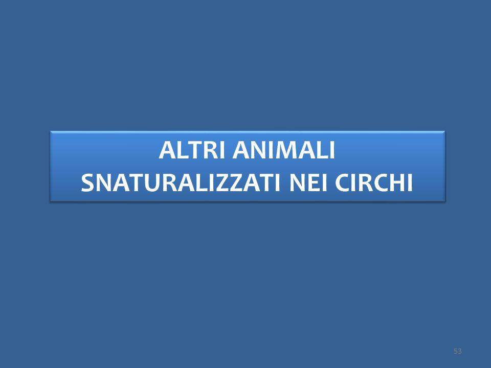 ALTRI ANIMALI SNATURALIZZATI NEI CIRCHI 53