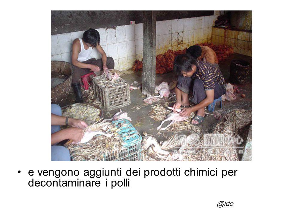 e vengono aggiunti dei prodotti chimici per decontaminare i polli @ldo
