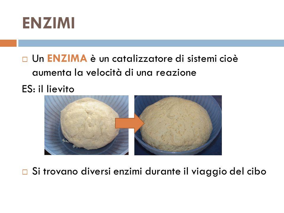ENZIMI  Un ENZIMA è un catalizzatore di sistemi cioè aumenta la velocità di una reazione ES: il lievito  Si trovano diversi enzimi durante il viaggio del cibo