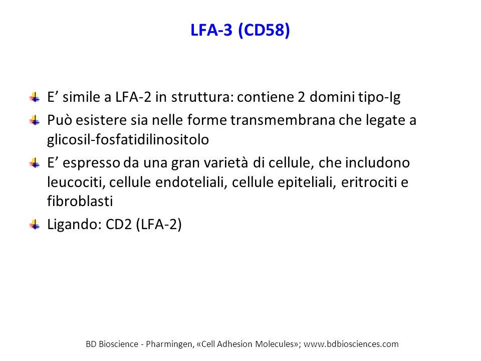 LFA-3 (CD58) E' simile a LFA-2 in struttura: contiene 2 domini tipo-Ig Può esistere sia nelle forme transmembrana che legate a glicosil-fosfatidilinositolo E' espresso da una gran varietà di cellule, che includono leucociti, cellule endoteliali, cellule epiteliali, eritrociti e fibroblasti Ligando: CD2 (LFA-2) BD Bioscience - Pharmingen, «Cell Adhesion Molecules»; www.bdbiosciences.com