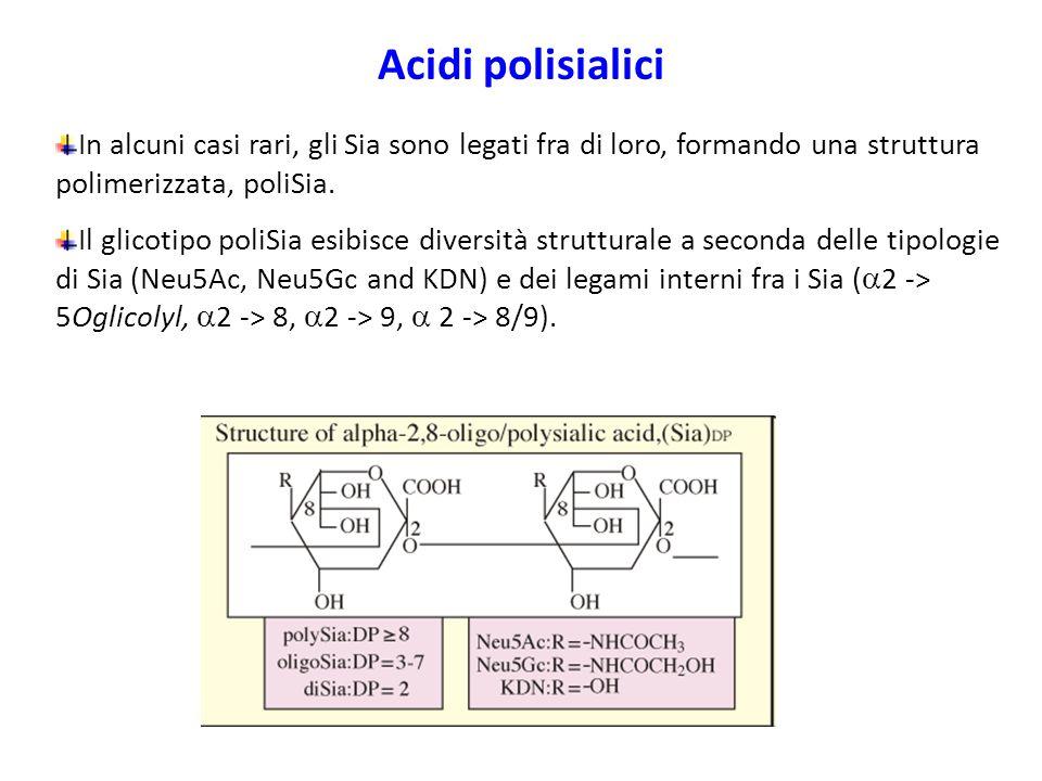 Acidi polisialici In alcuni casi rari, gli Sia sono legati fra di loro, formando una struttura polimerizzata, poliSia.