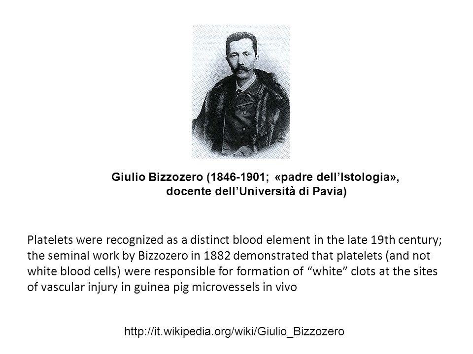 Giulio Bizzozero (1846-1901; «padre dell'Istologia», docente dell'Università di Pavia) http://it.wikipedia.org/wiki/Giulio_Bizzozero Platelets were re