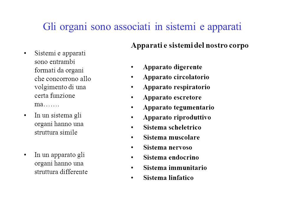 Gli organi sono associati in sistemi e apparati Sistemi e apparati sono entrambi formati da organi che concorrono allo volgimento di una certa funzion