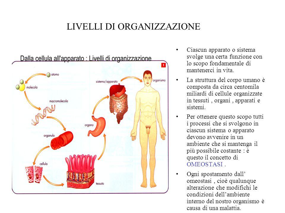 Gli organi sono associati in sistemi e apparati Sistemi e apparati sono entrambi formati da organi che concorrono allo volgimento di una certa funzione ma…….