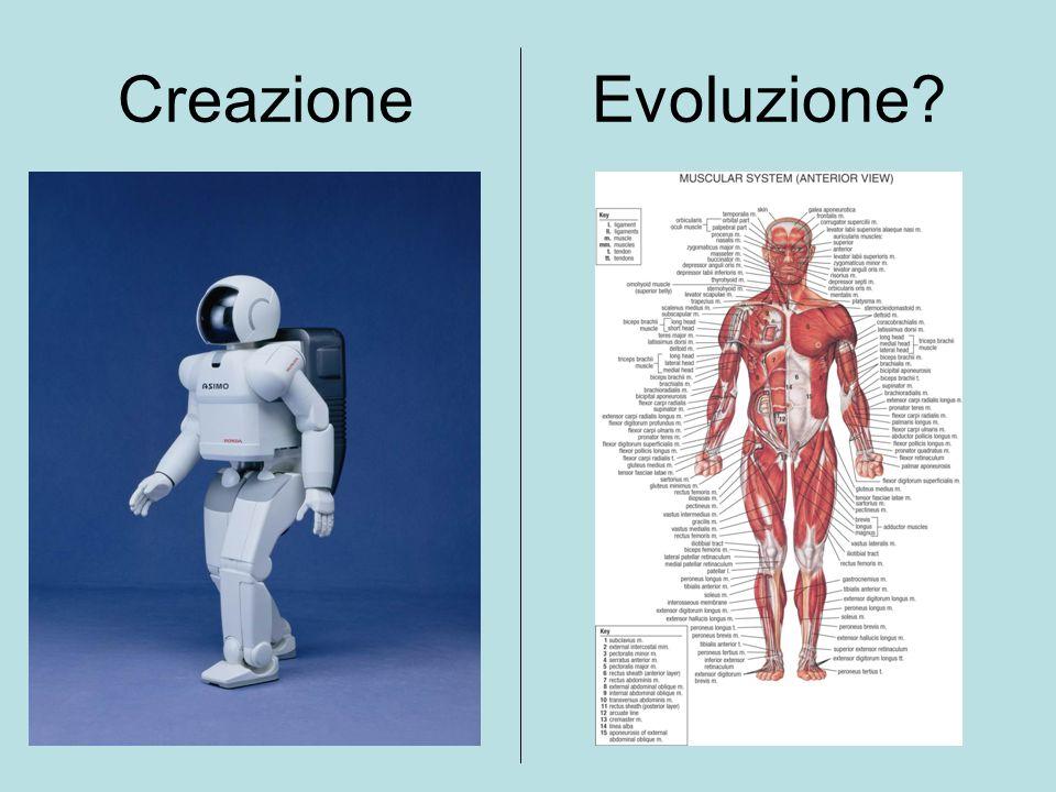 Creazione Evoluzione