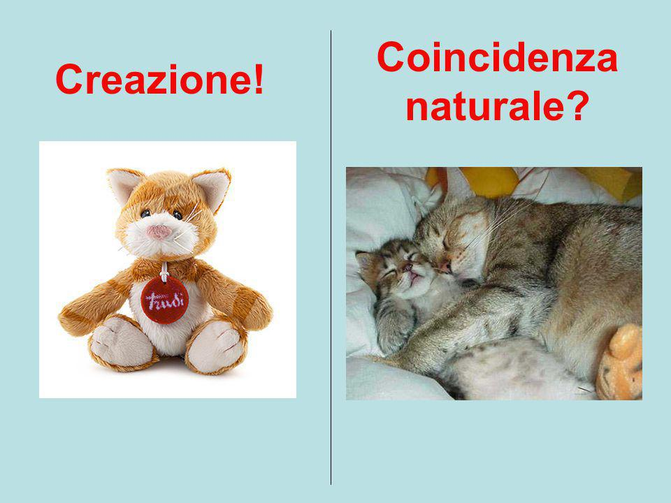 Coincidenza naturale?