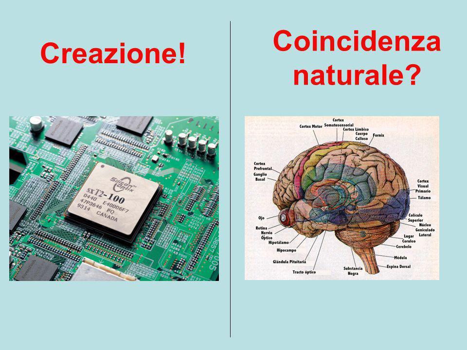 Diciamo che questa è una creazione! E che questa è appena una coincidenza naturale !!