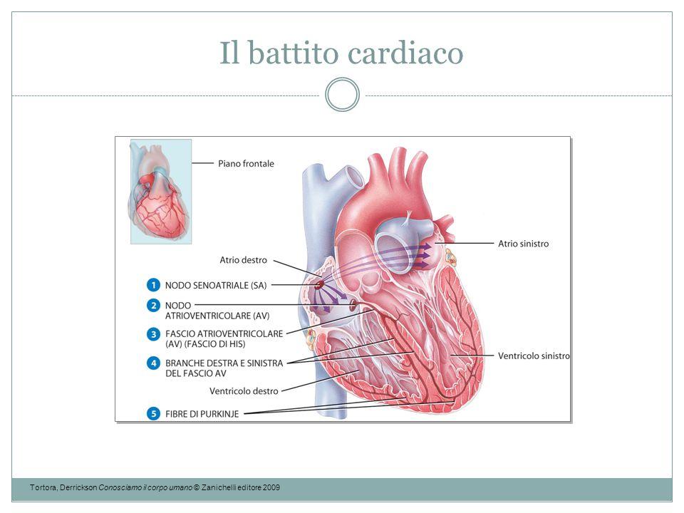 Il battito cardiaco Tortora, Derrickson Conosciamo il corpo umano © Zanichelli editore 2009