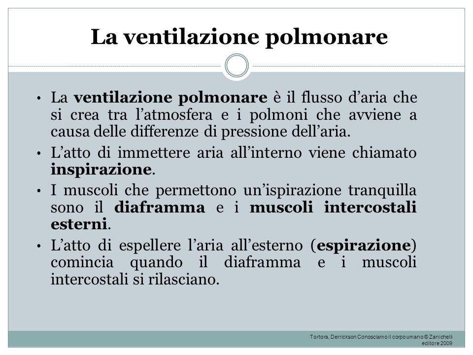 La ventilazione polmonare La ventilazione polmonare è il flusso d'aria che si crea tra l'atmosfera e i polmoni che avviene a causa delle differenze di