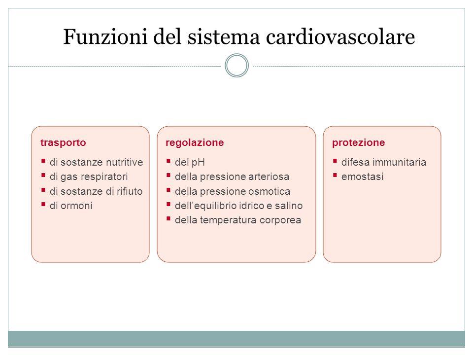 Funzioni del sistema cardiovascolare regolazione  del pH  della pressione arteriosa  della pressione osmotica  dell'equilibrio idrico e salino  d