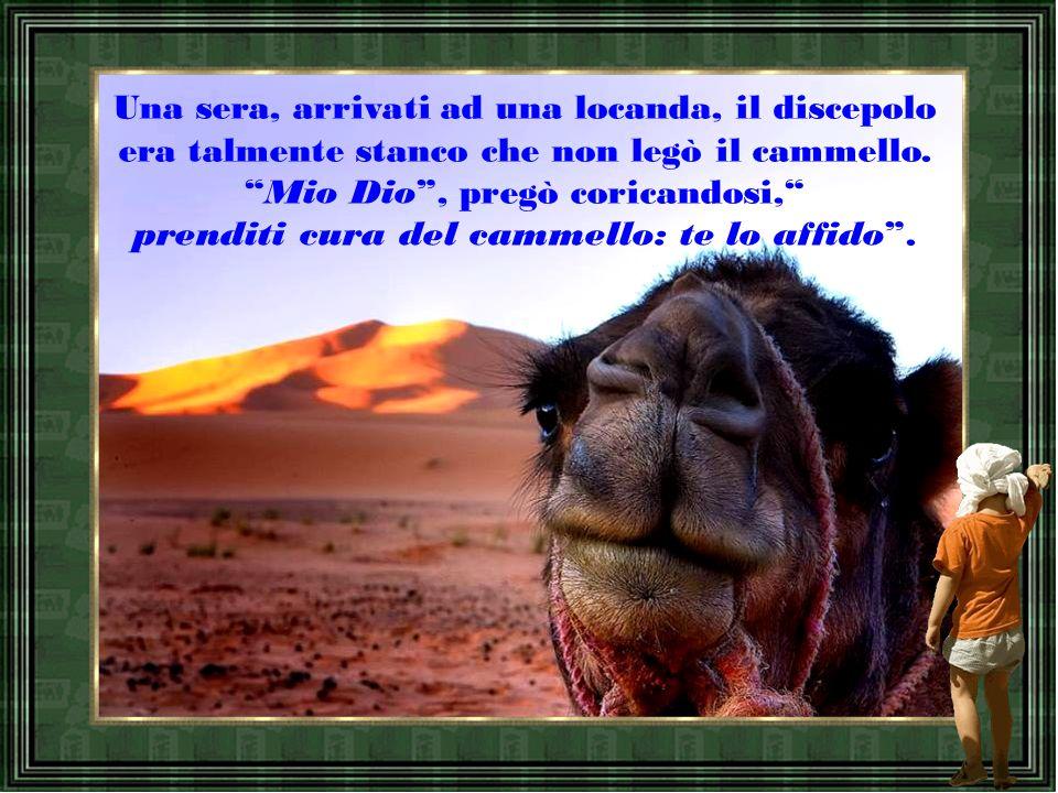 Un maestro viaggiava nel deserto con un discepolo incaricato di occuparsi del cammello.