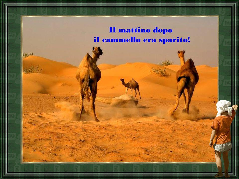 """Una sera, arrivati ad una locanda, il discepolo era talmente stanco che non legò il cammello. """"Mio Dio"""", pregò coricandosi,"""" prenditi cura del cammell"""