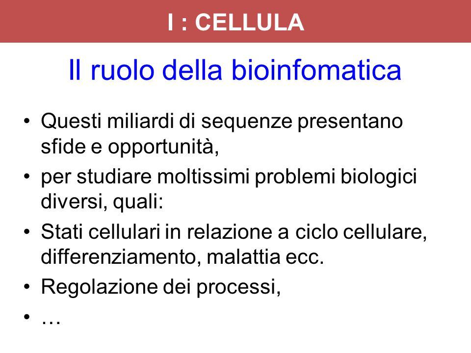 Il ruolo della bioinfomatica Questi miliardi di sequenze presentano sfide e opportunità, per studiare moltissimi problemi biologici diversi, quali: St
