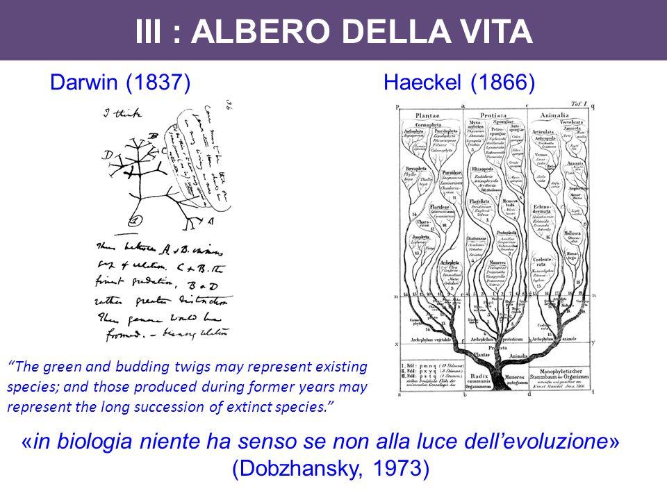 """III : ALBERO DELLA VITA Darwin (1837)Haeckel (1866) «in biologia niente ha senso se non alla luce dell'evoluzione» (Dobzhansky, 1973) """"The green and b"""