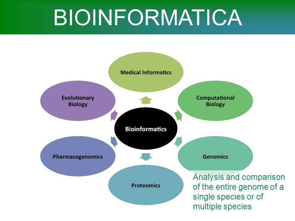 BIOINFORMATICA Study of how the genome is expressed in proteins, and of how these proteins function and interact