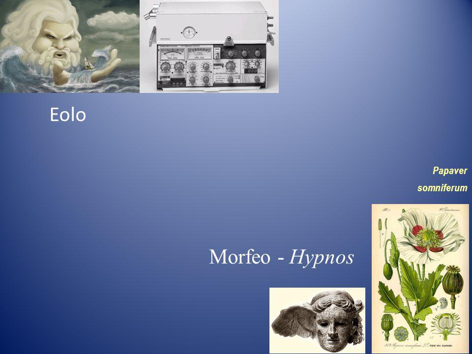 Eolo Morfeo - Hypnos Papaver somniferum