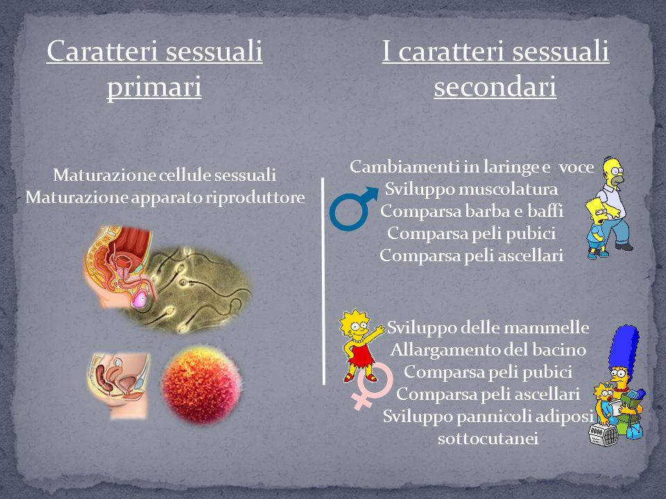 Caratteri sessuali primari Maturazione cellule sessuali Maturazione apparato riproduttore I caratteri sessuali secondari Sviluppo delle mammelle Allar