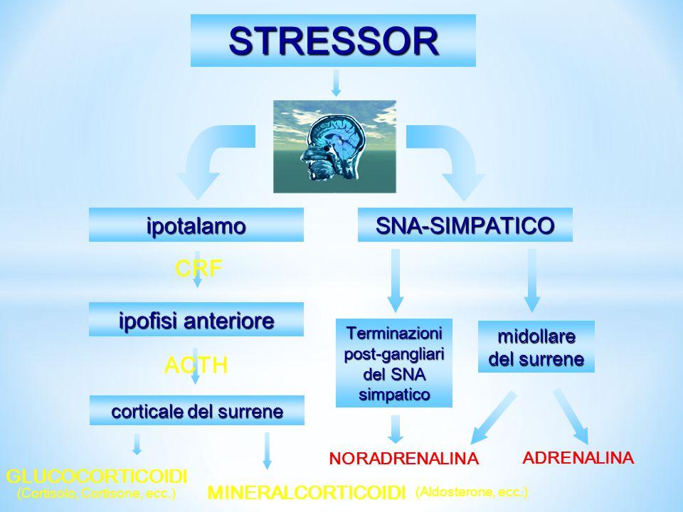 L'attivazione emozionale e la risposta catecolamminica ad essa correlata dipendono dalla valutazione cognitiva dello stimolo e dal suo significato sul piano emotivo per il soggetto Stress e catecolamine Stimoli Valutazione Cognitiva EFFETTI SOMATICI + PA + FC + gettata cardiaca + glicogenolisi + lipolisi + dilatazione bronchiale - Attività intestinale Attivazione emozionale Aumento delle CATECOLAMINE EFFETTI COMPORTAMENTALI.
