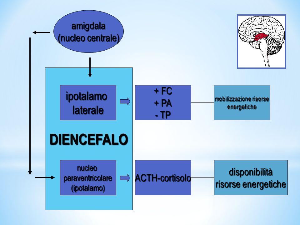 amigdala (nucleo centrale) nucleo tegmentale dorsolateraleattivazionecorticale area tegmentale ventralevigilanzacomportamentale(dopamina)attenzioneconcentrazioneapprendimentomemoria locus coeruleus aumentovigilanza nucleo reticolare ponto-caudalereazioned'allerta MESENCEFALOMESENCEFALO