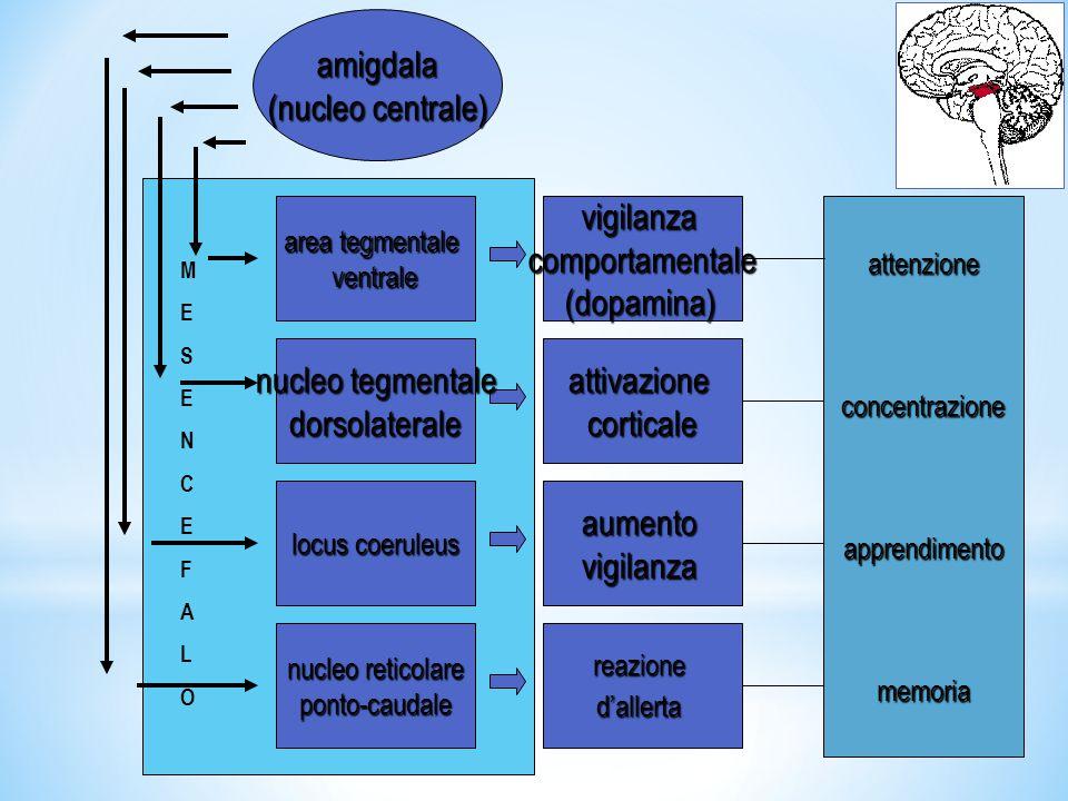 BULBO(MIELENCEFALO) amigdala (nucleo centrale) nucleoparabrachiale + FR + AR disponibilitàRiserve energetiche energetiche mobilitazioneRiserve regolazioneFCPATM