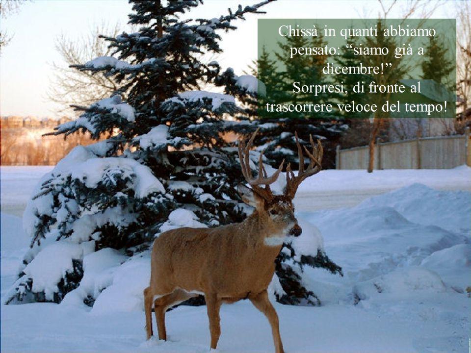 Chissà in quanti abbiamo pensato: siamo già a dicembre! Sorpresi, di fronte al trascorrere veloce del tempo!