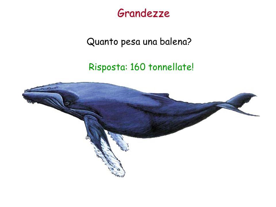 Grandezze Quanto pesa una balena? Risposta: 160 tonnellate!