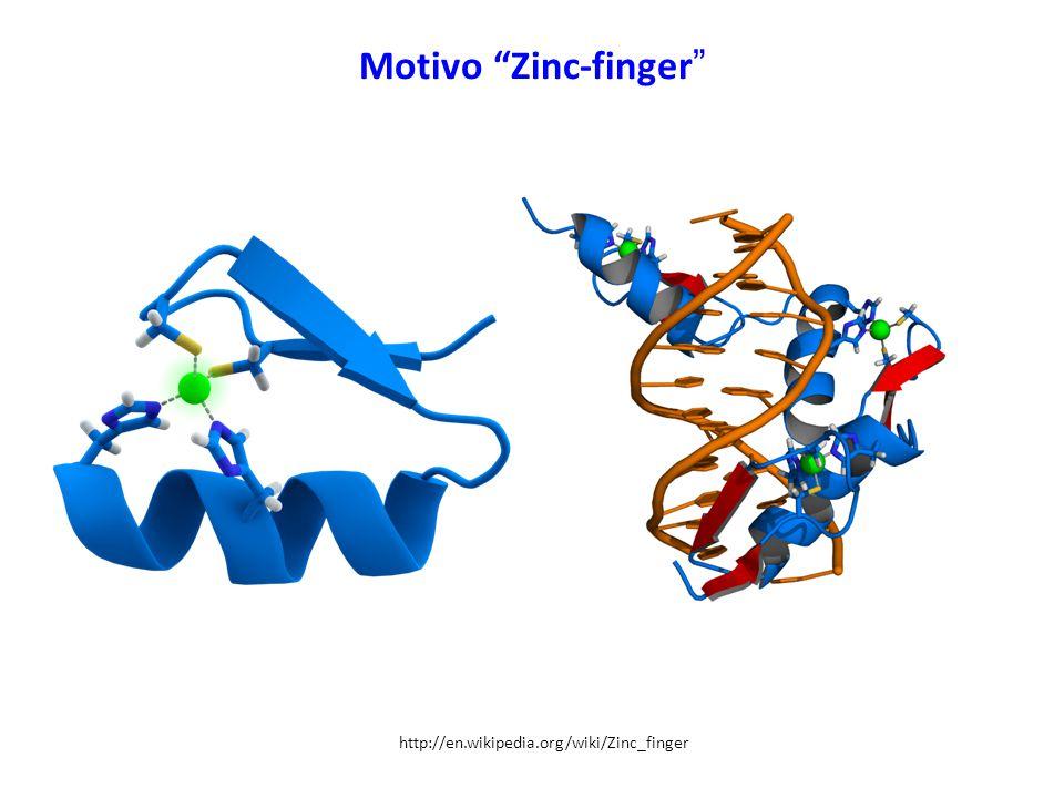 "Motivo ""Zinc-finger "" http://en.wikipedia.org/wiki/Zinc_finger"