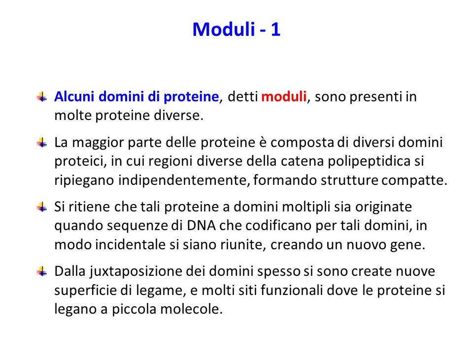 Moduli - 1 Alcuni domini di proteine, detti moduli, sono presenti in molte proteine diverse. La maggior parte delle proteine è composta di diversi dom