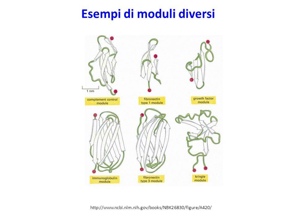 Esempi di moduli diversi http://www.ncbi.nlm.nih.gov/books/NBK26830/figure/A420/