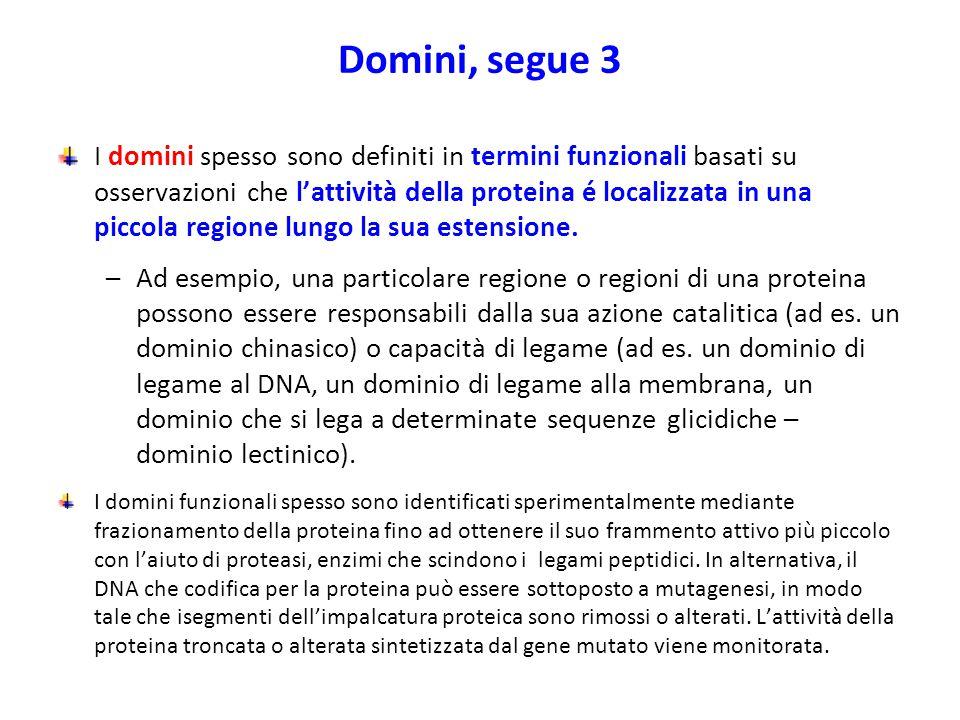 Domini, segue 3 I domini spesso sono definiti in termini funzionali basati su osservazioni che l'attività della proteina é localizzata in una piccola